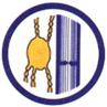 Società Italiana di Flebolinfologia – SIFL